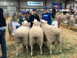 George Nicholls, Jock Nicholls and Lane Jackson holding the winning Sheepvention Interbreed Group 2019